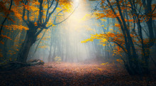 Fairy Forest In Fog. Fall Wood...