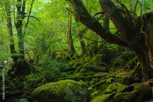白谷雲水峡 © akira1201