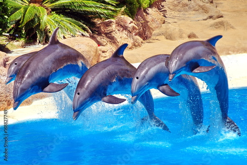 Foto op Plexiglas Dolfijnen dolphin