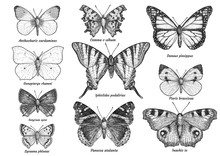 Butterfly Collection, Illustra...