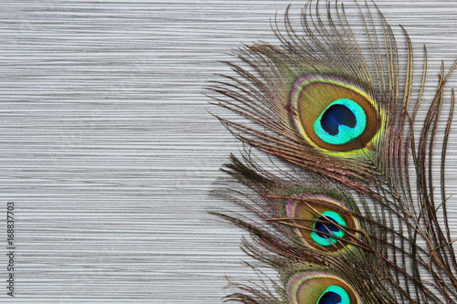 Foto op Plexiglas Pauw Peacock feathers background on stone