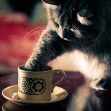 Cat With Paw Inside A Coffee O...