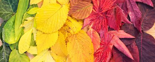 tecza-kolorowych-jesiennych-lisci-pan
