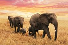 Familie Elefanten Auf Pfad In ...