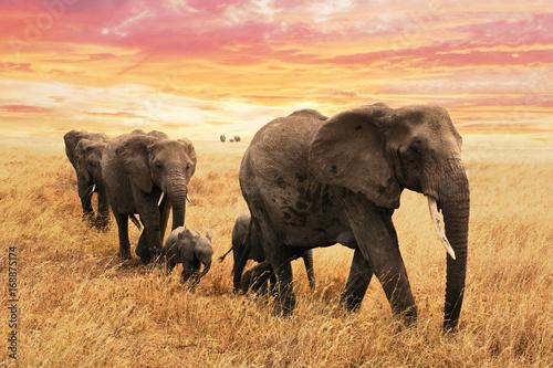 Deurstickers Afrika Familie Elefanten auf Pfad in Savanne