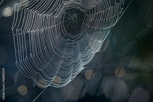 Spider's web on dark background