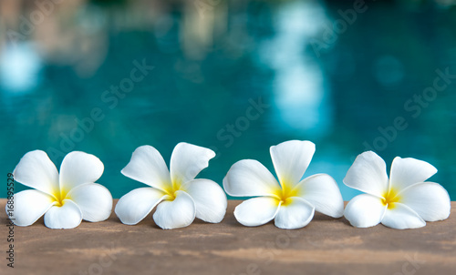 Photo Stands Plumeria Tropical frangipani white flower near the swimming pool, flower spa. Copy space.