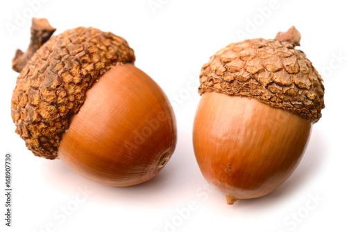 acorns isolated on white background Wallpaper Mural