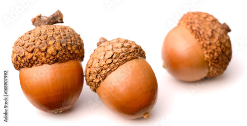 acorns isolated on white background Canvas Print