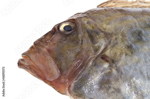 Photo  Close up San Pierre Fish in front of white background Zeus Faber John Dory