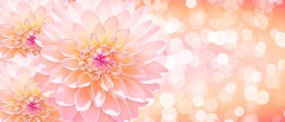 Wunderschöne Blumen im Sommer