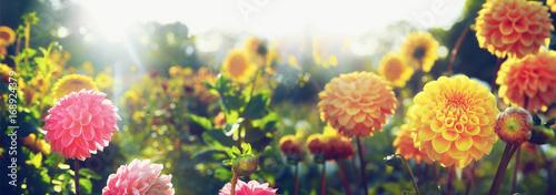 Fotografia Wunderschöne Blumen im Sommer