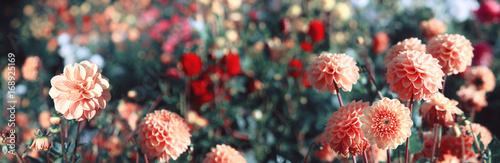 Fotografia, Obraz Wunderschöne Blumen im Sommer