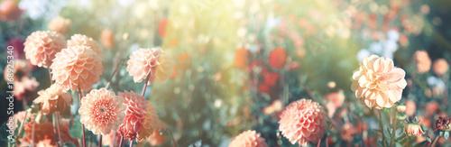 Plakat Piękne kwiaty w lecie
