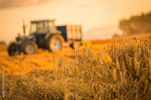 Spoed Foto op Canvas Cultuur tractor harvest