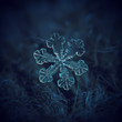 canvas print picture - Real snowflake macro photo: large snow crystal of split plate type with fine symmetry, simple shape and internal pattern. Snowflake glowing on dark blue textured background in natural light.