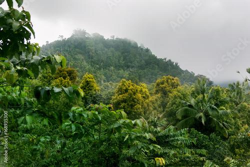las-tropikalny-2