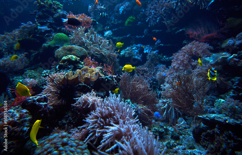 Obraz na dibondzie (fotoboard) podwodne tło. Podwodna scena. Podwodny świat. Podwodny krajobraz życia