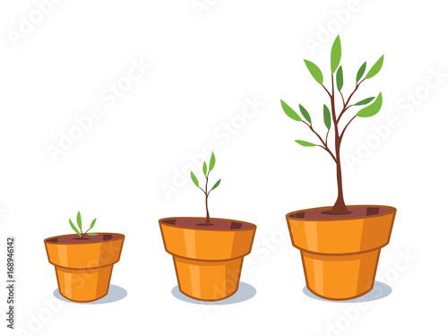 Planta de maceta Pósters en Europosters.es