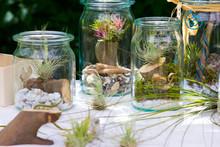 Tillandsia Ionantha And Tillandsia Argentea In A Jar.