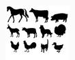 canvas print picture - Farm Animals Livestock