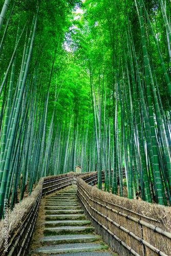 Fotobehang Bamboe 京都 竹林