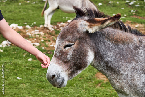 Deurstickers Ezel Child caressing a small donkey standing completely calm, with a smile on the muzzle, in Dobratsch Nature Park near Villach in Austria