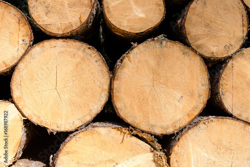 Fotografía  Pile of wood logs ready for winter