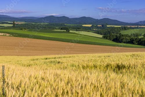 Fotobehang Weide, Moeras 丘の町美瑛の麦畑