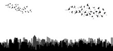 Silhouette Of Flying Birds, Flock