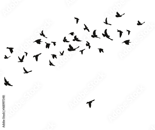 silhouette of flying birds Canvas Print