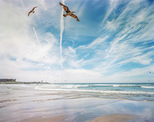 Two Seagulls Flying Over A Sunny Beach In Porto, Portugal (Film Photo)