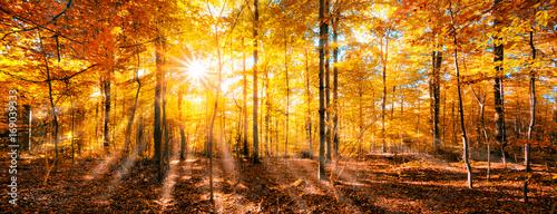 Papiers peints Forets Goldener Oktober im Herbst