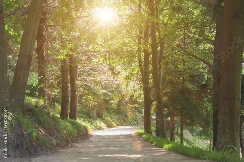 Photo Stands Road in forest beautiful green forest