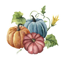 Watercolor Autumn Pumpkins. Ha...