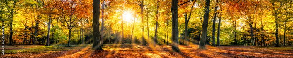 Fototapety, obrazy: Buntes Herbstwald Panorama im Sonnenlicht