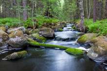 Small Stream In Mixed Forest