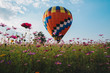 The hot air balloons flying over the cosmos flowers field in Singha park in Chiang Rai province of Thailand.