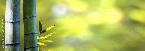 Deurstickers Bamboo beautiful bamboo branch in bamboo forest with beautiful green nature background