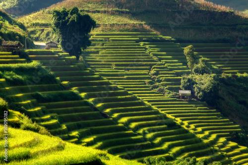 Poster Rijstvelden Mu Cang Chai, Vietnam landscape terraced rice field near Sapa. Mu Cang Chai rice fields stretching across mountainside in Vietnam.