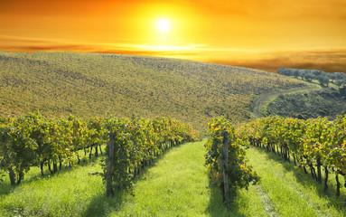 Fototapeta Toskania Tuscany vineyards, Chianti region, Italy