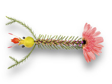 Flower Composition In The Pattern Of Lobster, Isolated With Clipping Path