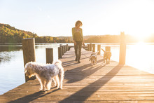 Woman Walking The Dogs On The Dock At Sunset