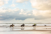 Horses At Gallop On The Beach ...