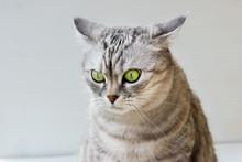 Portrait Of Surprised Cat On W...