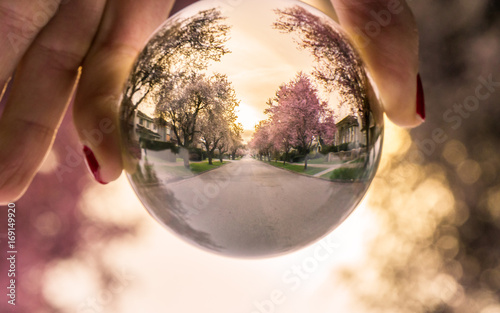 Tuinposter Kersenbloesem Cherry Globe