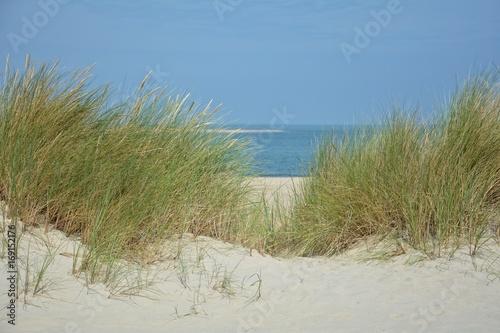 Blick durch Dünen Grass zum Meer © Claudia Evans