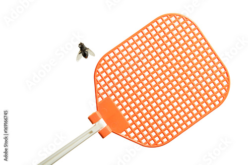 Dead flesh fly is lying on its back next to an orange fly swatter. Isolated on white background.