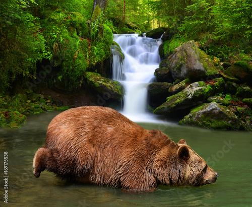 niedzwiedz-brunatny-brodzacy-sie-w-gorskim-potoku-na-tle-wodospadu