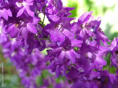 Purple Flowers Flower Background Nature Spring Garden Violet